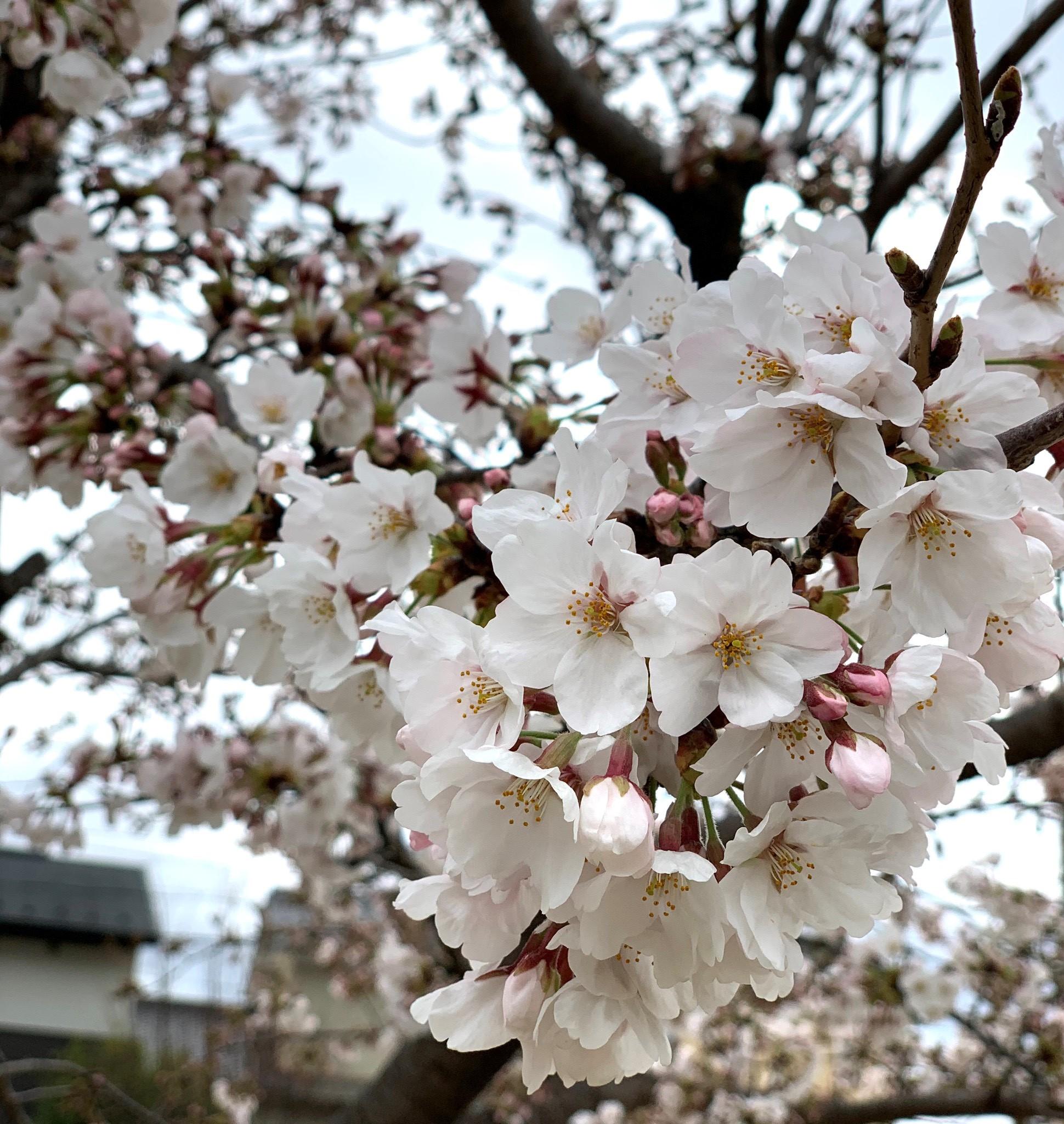 春を探しに♬…part2