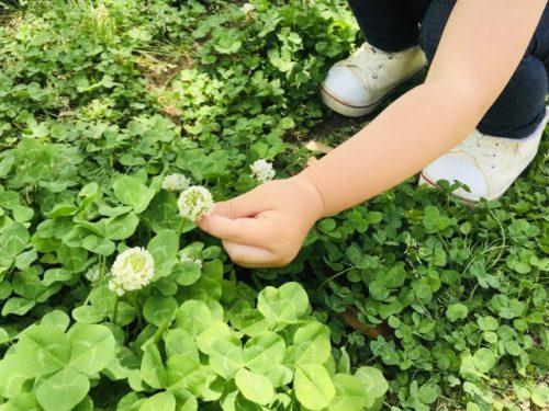 「みどりの日」は、身近な自然に親しみながら感性を育てよう!